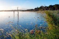 Озеро Samsonvale, Квинсленд Стоковая Фотография RF