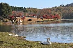 Озеро Shidakako в осени Стоковые Изображения