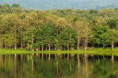 озеро side#3 7 kot Стоковая Фотография RF