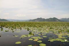 озеро skadar стоковая фотография rf