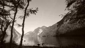 Озеро sseen среди ветвей дерева видеоматериал