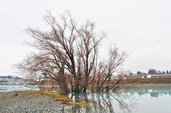 Озеро Tekapo, южный остров - Новая Зеландия Стоковые Фотографии RF