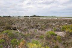 Озеро Thetis с Bushland Стоковые Фото