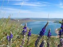 Озеро Uchum Стоковая Фотография