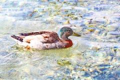 Озеро Wakatipu Стоковая Фотография RF