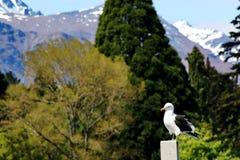Озеро Wakatipu Стоковые Фотографии RF
