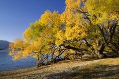 Озеро Wanaka, Новая Зеландия стоковая фотография