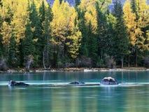 озеро xinjiang kanas фарфора Стоковые Фотографии RF