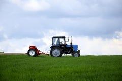 Озимая пшеница катят водителем, который трактора удабривать с минеральными удобрениями стоковое изображение rf