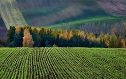 Озимые культуры в фоне куста и холмов осени Южная Моравия взгляд городка республики cesky чехословакского krumlov средневековый с стоковые изображения