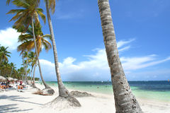 окаимленные пляжем валы курорта ладони тропические Стоковые Фото