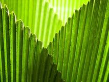 окаймляет fronds пересекая зонтик листьев Стоковое Изображение
