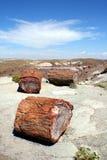 окаменелая древесина wa Стоковые Изображения RF