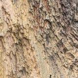 Окаменелая деревянная предпосылка текстуры Стоковая Фотография