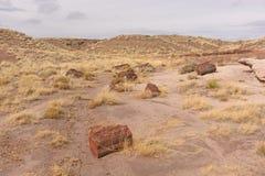Окаменелая панорама журнала в пустыне Стоковые Изображения RF