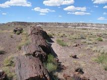Окаменелая древесина в пустыне Стоковые Фотографии RF