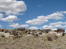 Окаменелая древесина в пустыне Стоковые Изображения RF