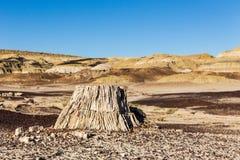 Окаменелая древесина, пень дерева в пустыне, изменение климата, глобальное потепление Стоковые Изображения RF