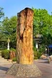 Окаменелая древесина Стоковые Фотографии RF