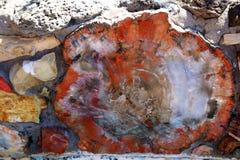 Окаменелая древесина стоковое изображение rf