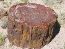 Окаменелая древесина Стоковое Изображение