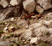 Окаменелые древесина и утес Стоковые Фото