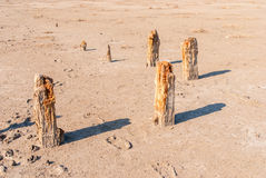 Окаменелые stubs дерева на озере, Kuyalnik, Украине Стоковое фото RF