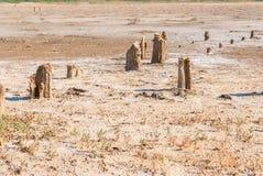 Окаменелые stubs дерева на озере, Kuyalnik, Украине Стоковое Фото