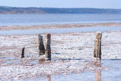 Окаменелые stubs дерева на озере, Kuyalnik, Украине Стоковая Фотография RF