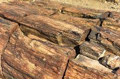 Окаменелый лес, Намибия Стоковое Изображение