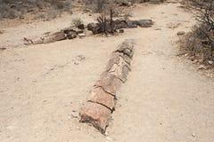 Окаменелый лес, Намибия стоковые фото