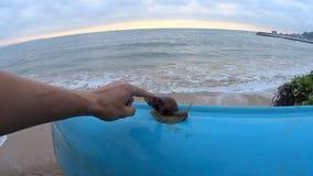Океанские волны и улитка Shi Lanka видеоматериал