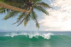 Океанские волны против голубого неба и пальм Стоковые Изображения