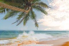 Океанские волны против голубого неба и пальм Стоковые Изображения RF