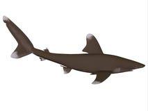 Океанский профиль акулы Whitetip Стоковое фото RF