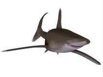 океанское whitetip акулы Стоковое Изображение RF