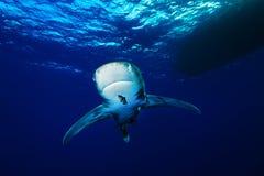 океанское whitetip акулы Стоковое фото RF