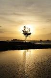 Океаны дерева и захода солнца Стоковое Изображение
