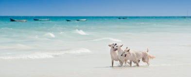 Океан, белый календарь открытки дизайна ландшафта релаксации солнечного дня солнца песка голубого неба пляжа выслеживает игру и в стоковое фото rf