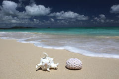 Океан бирюзы песчаного пляжа мальчишкаа моря раковины моря Стоковая Фотография