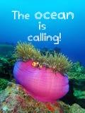 Океан вызывает дизайн цитаты для любовника океана стоковая фотография