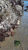 Океан галиотиса Стоковые Фото