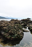 океан жизни Стоковые Изображения
