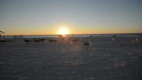 Океан захода солнца с чайками моря сток-видео