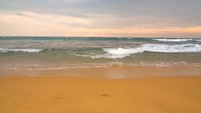 Океан и пляж в Шри-Ланке акции видеоматериалы