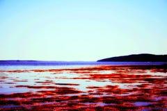 Океан Мейна Стоковые Изображения