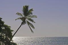 океан над Тихой океан пальмой Стоковые Изображения