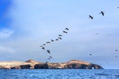Океан, остров и стадо птиц Стоковые Изображения