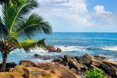 Океан пляжа тропический с пальмами и лагуной Стоковая Фотография