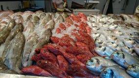 океан рыб свежий Стоковая Фотография RF